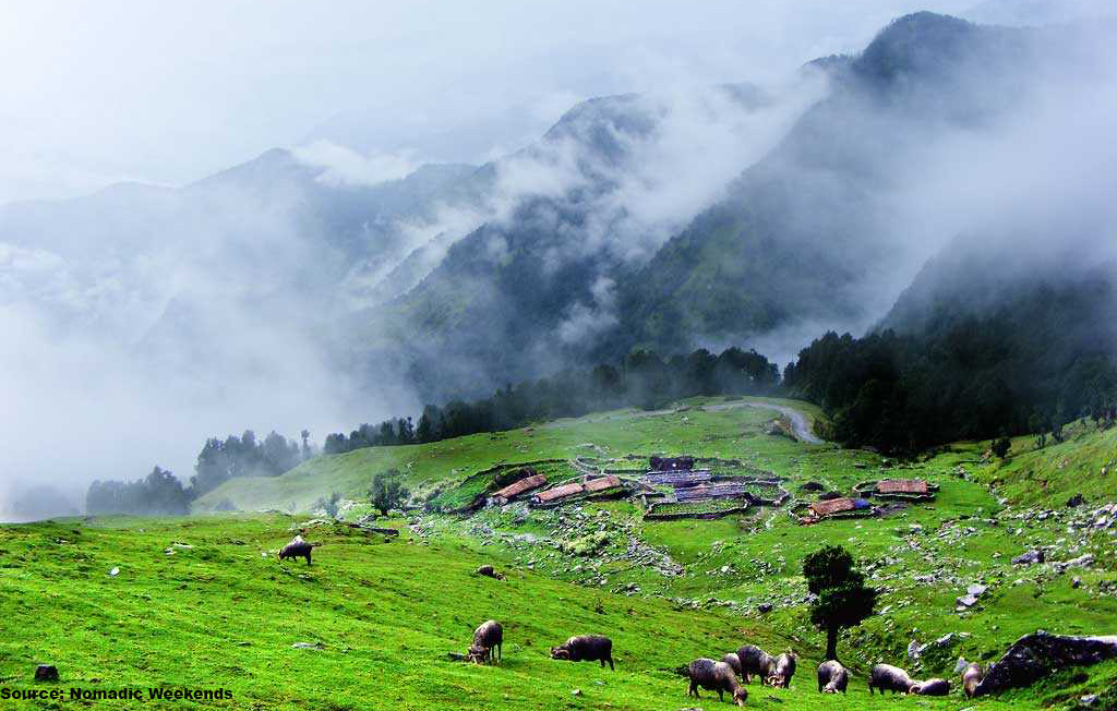 greenery in chopta after monsoons